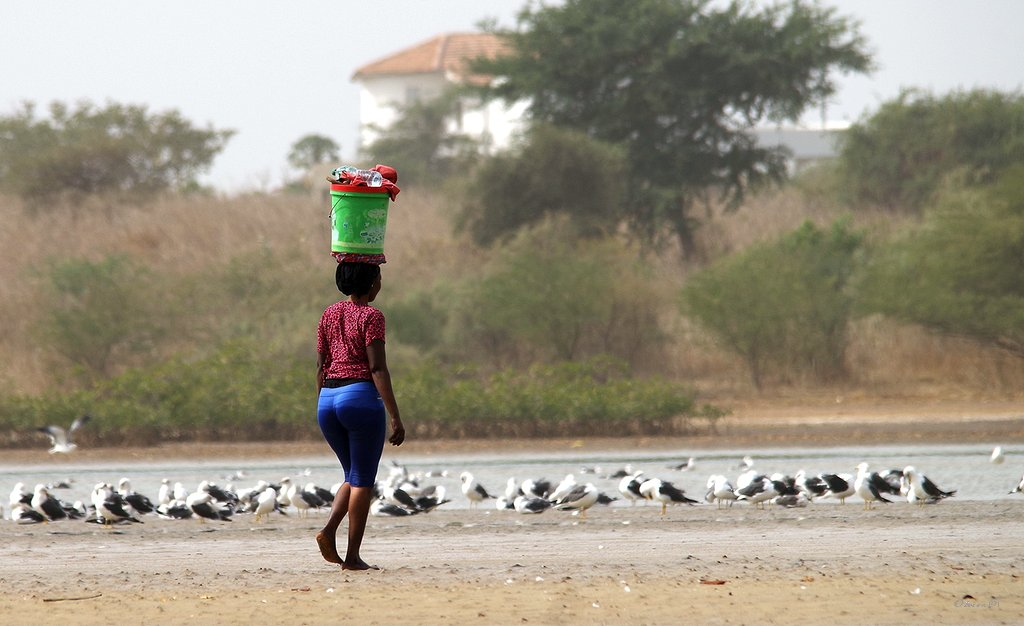 Vie au Sénégal 18032710573513189015634183