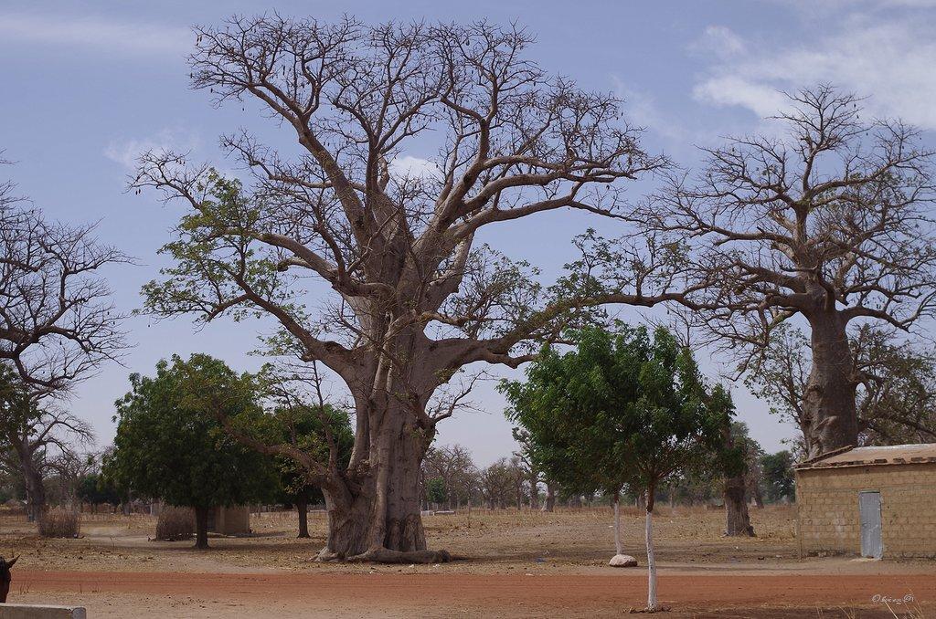 Vie au Sénégal 18032908370413189015637538