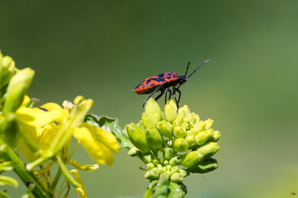 Macros/  proxi/  insectes  - Page 30 18041809235022554715675734