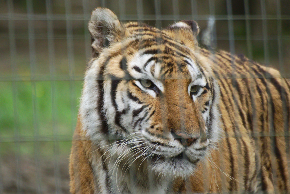 Zoos / Parcs animaliers - Page 15 18042412511014373715683518