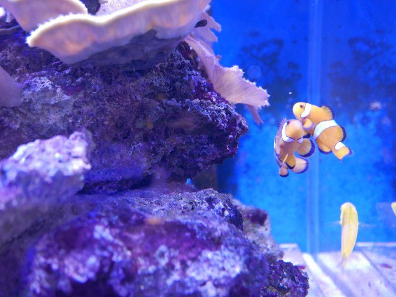 Aquarium 380 L total en système Jaubert déporté + ATS - Page 5 18050105245313025715694780