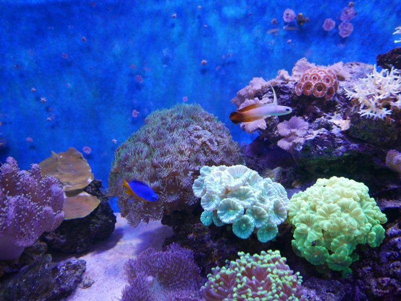 Aquarium 380 L total en système Jaubert déporté + ATS - Page 5 18050105245313025715694782