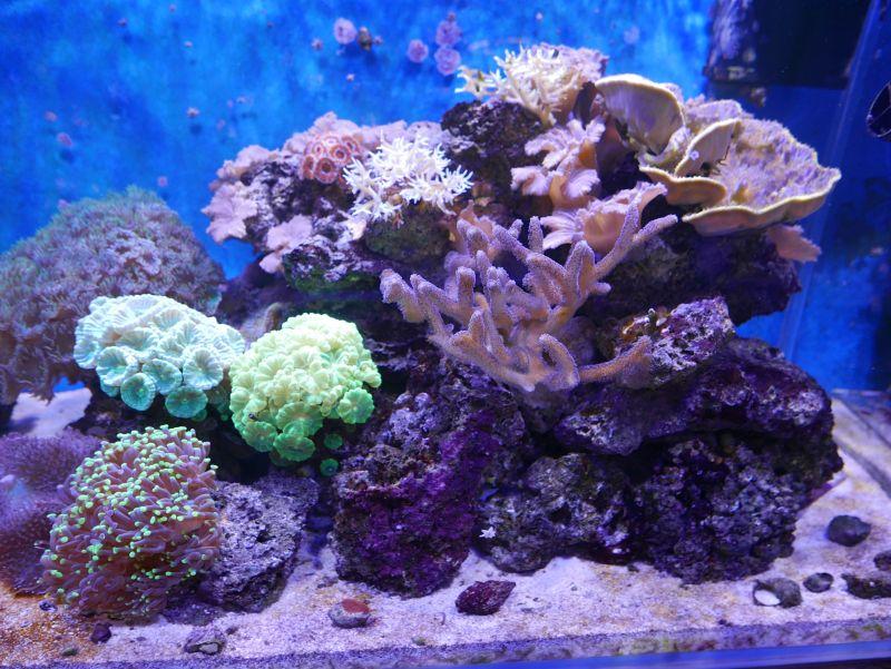 Aquarium 380 L total en système Jaubert déporté + ATS - Page 5 18050105245513025715694785