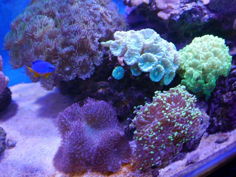 Aquarium 380 L total en système Jaubert déporté + ATS - Page 5 18050105245513025715694786