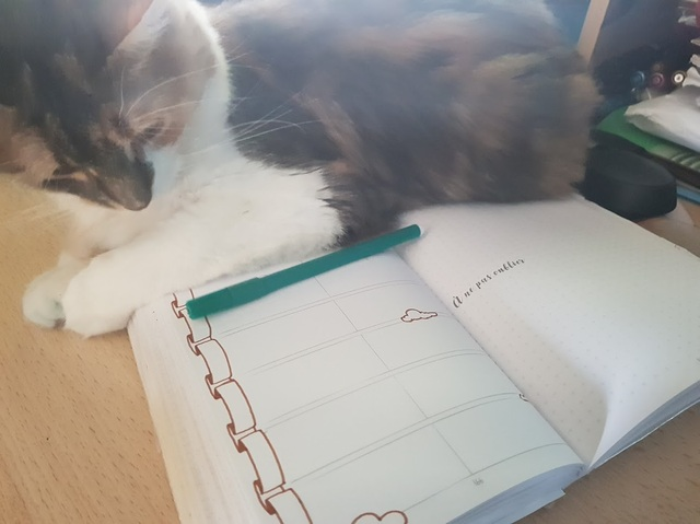 chat et bullet journal