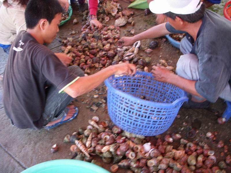 Dégustation de Coquillages au Vietnam 18062206095114587715773124