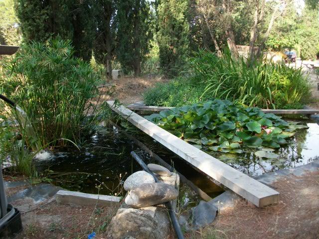 bassin naturel sans filtration au jardin forum de jardinage. Black Bedroom Furniture Sets. Home Design Ideas