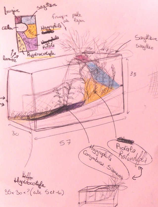 Mon projet aquarium low tech/aquascaping 18090410064717148915876713