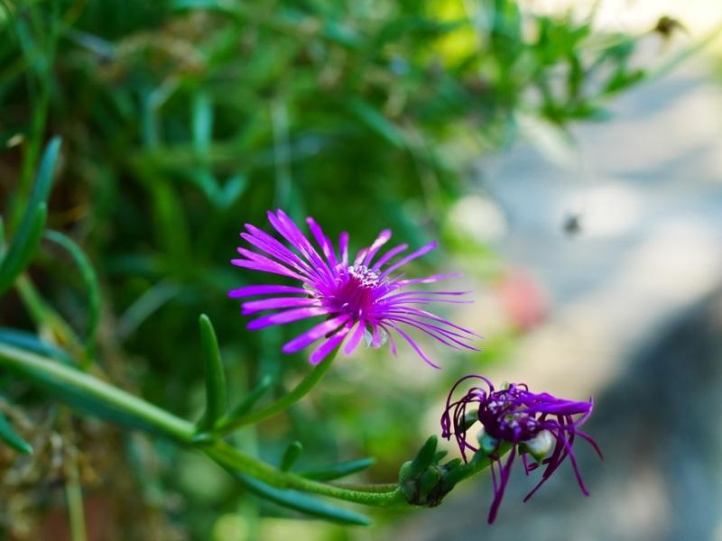 fleurs de mon jardin 18100707361022650015930540