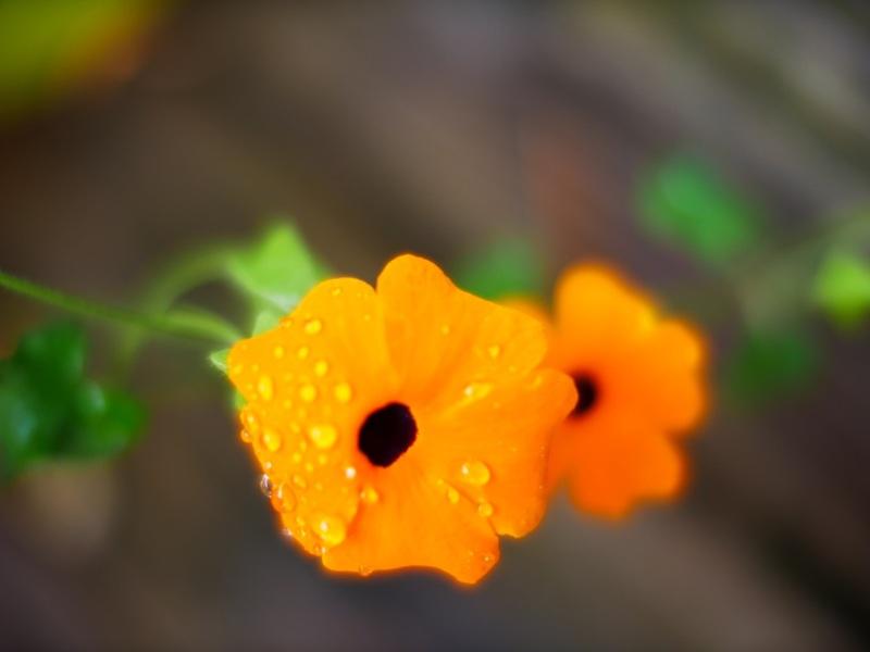 fleurs de mon jardin 18100707361122650015930542