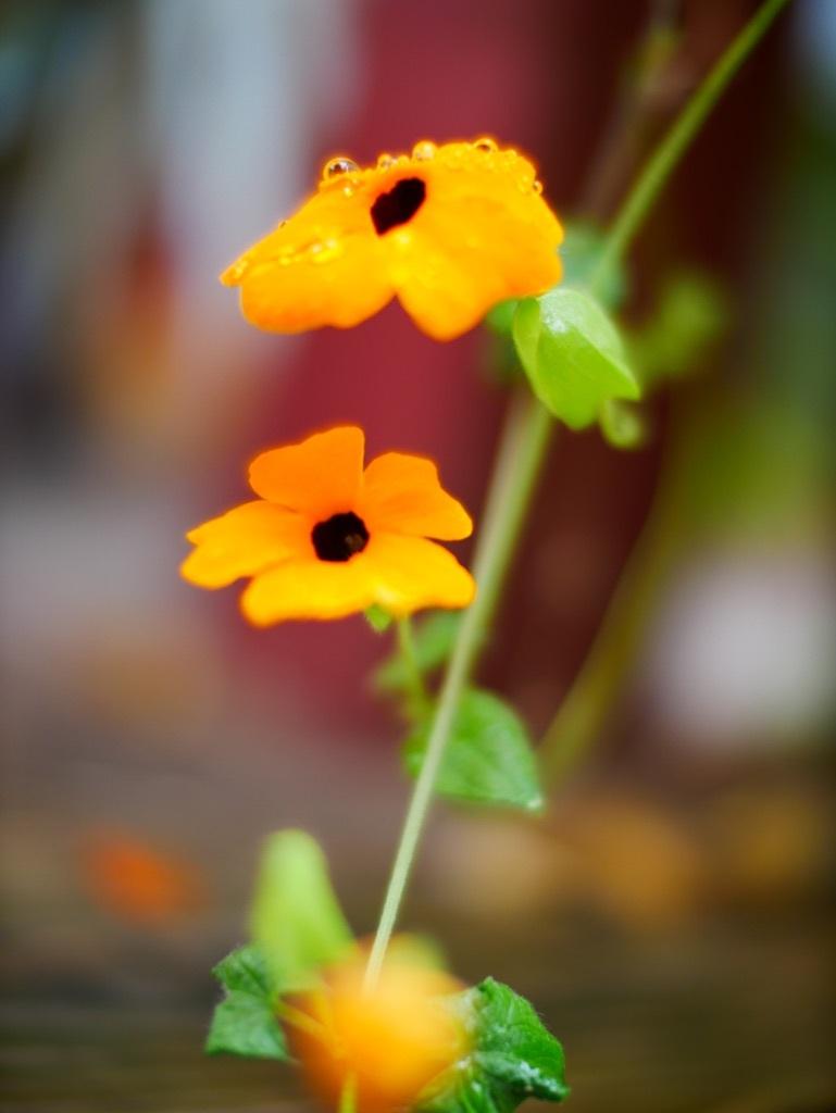 fleurs de mon jardin 18100707361222650015930543