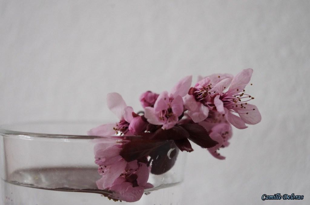 Fleurs toulousaines avril 2018 18103104360224303715972803
