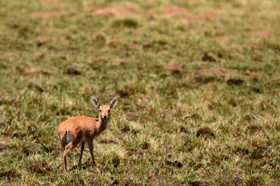Antilope2 (2)BCSUM