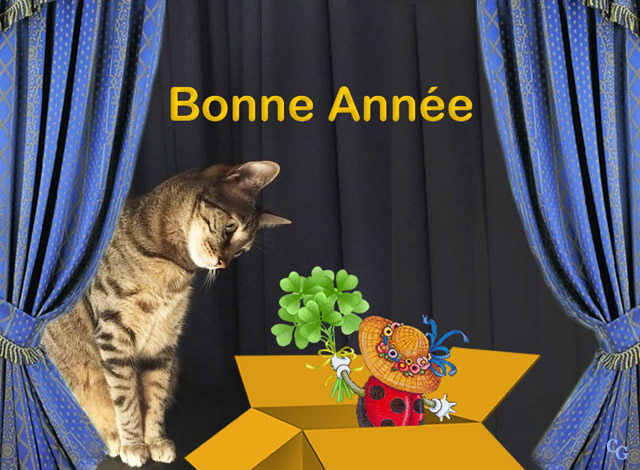 Chats : Nouvel-An 1812060414351858216026551