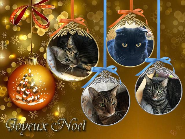 Chats : Noël 1812060421381858216026560
