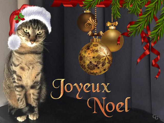 Chats : Noël 1812060421391858216026561