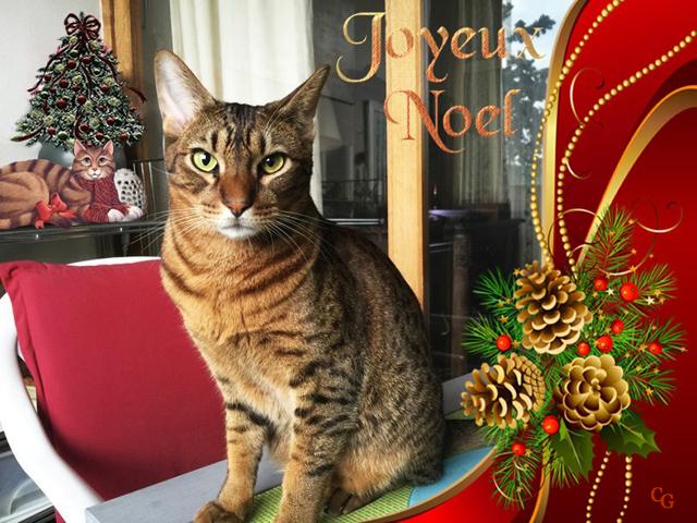 Chats : Noël 1812100928091858216032665