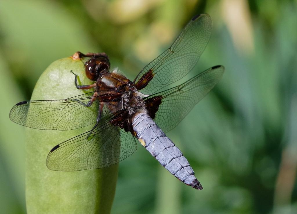 Macros/  proxi/  insectes  - Page 14 18122708492723579416051148