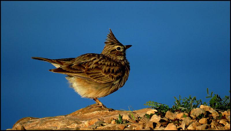 Forum oiseaux de la nature et sauvages: Nos p'tits copains à plume - Portail 19010511010323550116065956