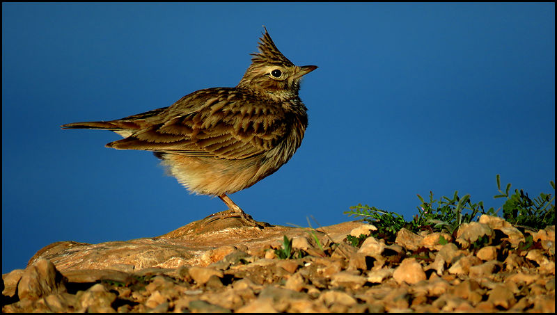 Forum oiseaux de la nature et sauvages: Nos p'tits copains à plume - Portail 19010511010323550116065957