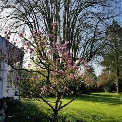 L'album de la chambre d'hôtes La Sévinais - Le magnolia v1