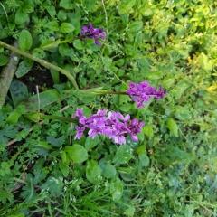 L'album de la chambre d'hôtes La Sévinais - Orchidée sauvage v1