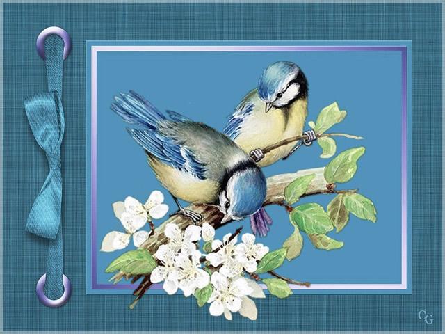 Oiseaux I 1903211019341858216168982