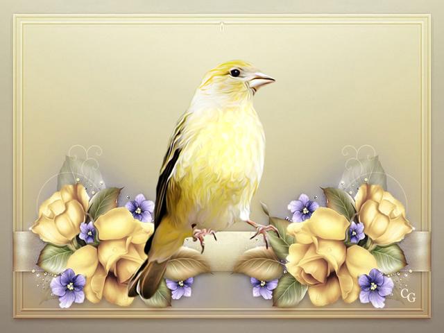 Oiseaux I 1903211019351858216168983