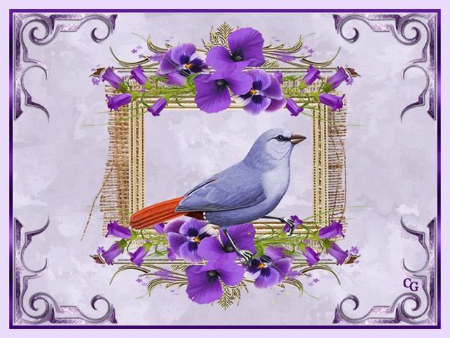 Oiseaux II 1903220427381858216169692