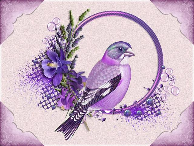 Oiseaux II 1903220427391858216169695