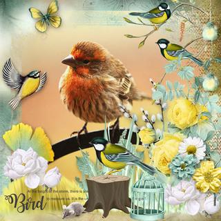 MAY FLAVOR - BIRDS OF SPRING - samedi 4 mai / saturday may 4th 19050601423019599816226096