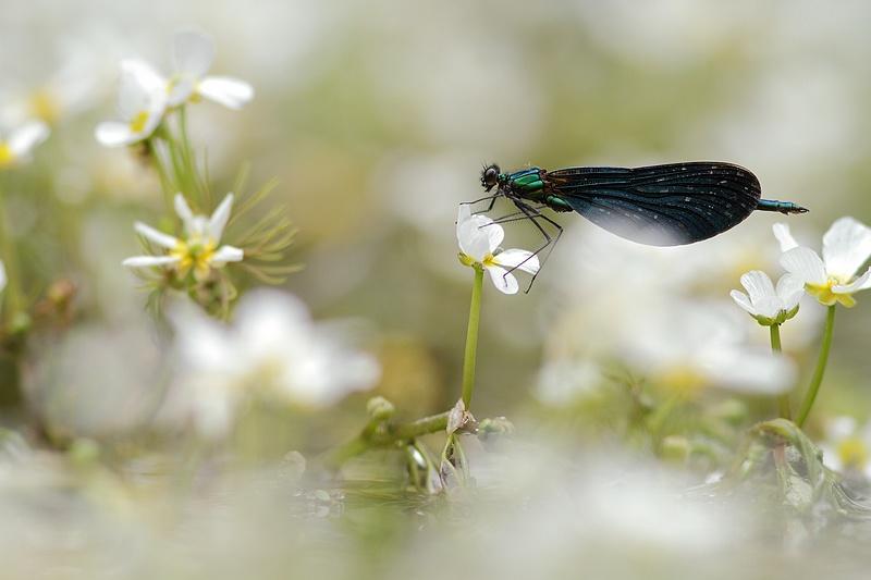 A fleur d'eau + MAJ 19061010124117878016267991