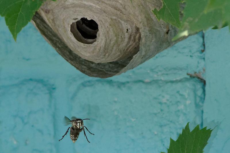 Macros/  proxi/  insectes  - Page 9 19080309261624817616342786