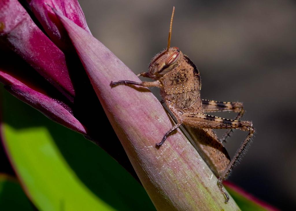 Macros/  proxi/  insectes  - Page 10 19080410254923579416343032