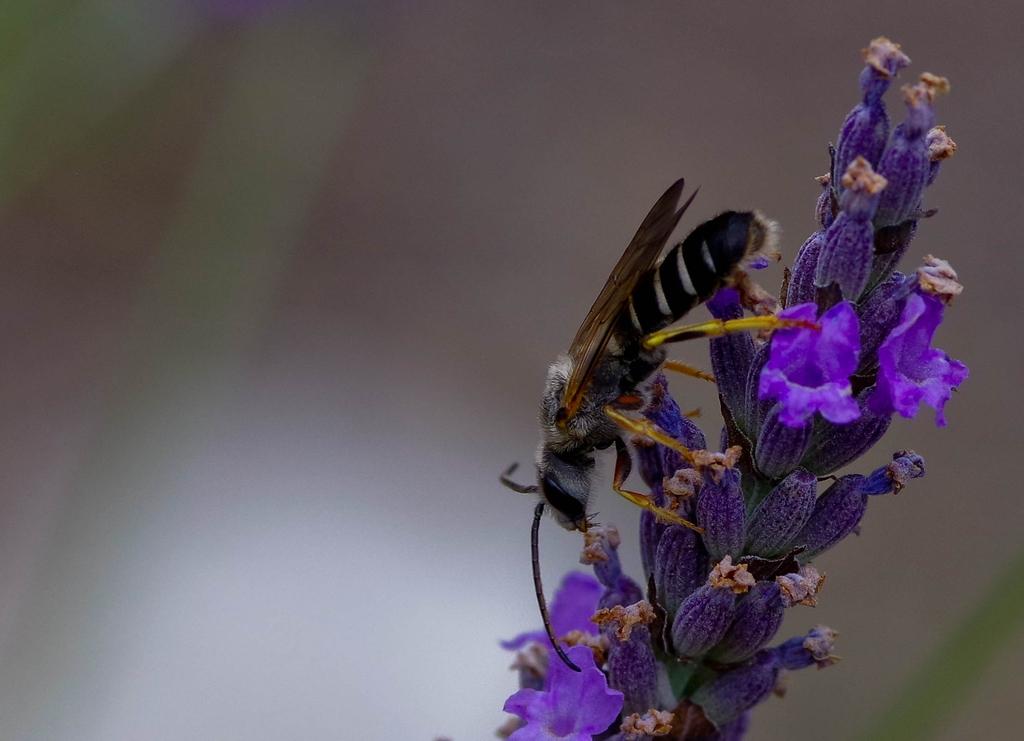 Macros/  proxi/  insectes  - Page 9 19080410280423579416343033