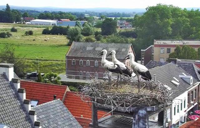 Cigogne (Pays-Bas) 26036-EU103-2016-103