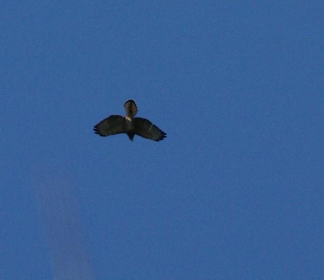 aide pour identifier plusieurs oiseaux  331223-IMGP2031