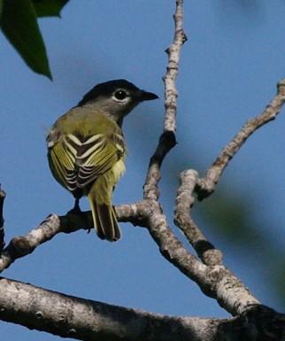 aide pour identifier plusieurs oiseaux  809668-IMGP1999