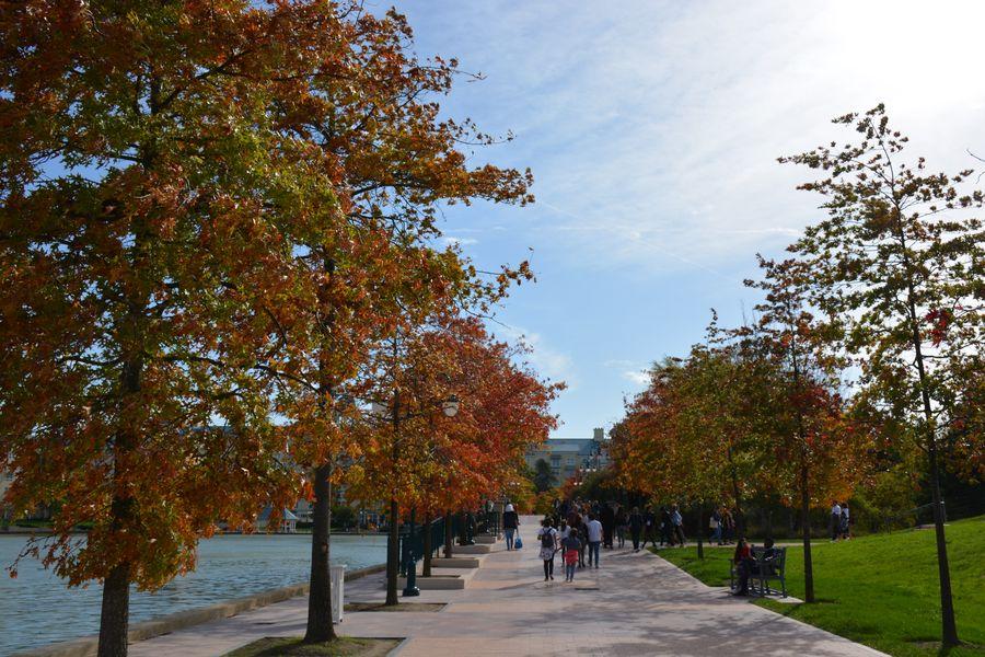 La végétation de Disneyland Paris 19101407250823968016460994
