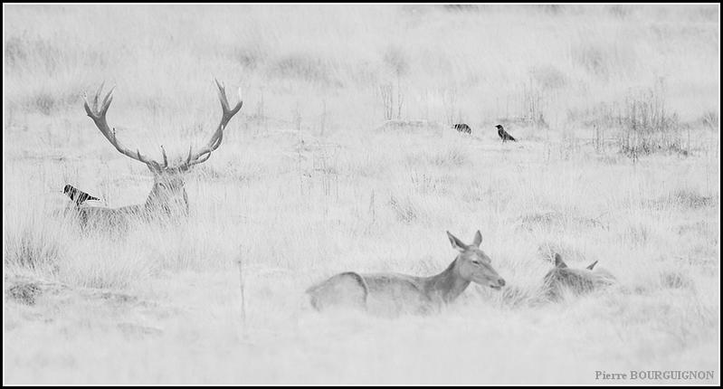 Photographie infrarouge par Pierre BOURGUIGNON, photographe animalier belge