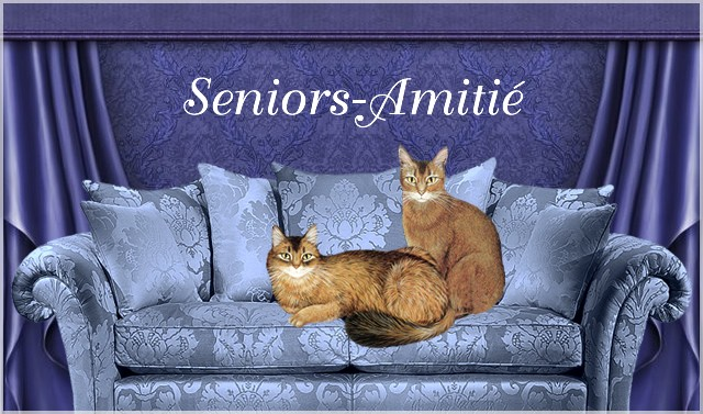 Les Forums de Seniors-Amitié DV3RIb-Salon-101