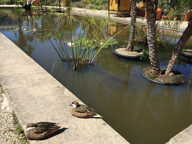 Jardin Botanique 2001260739011858216618901