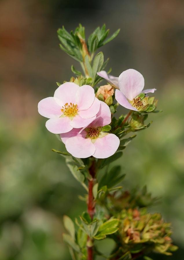 Douceur florale 20040212310221718616721209