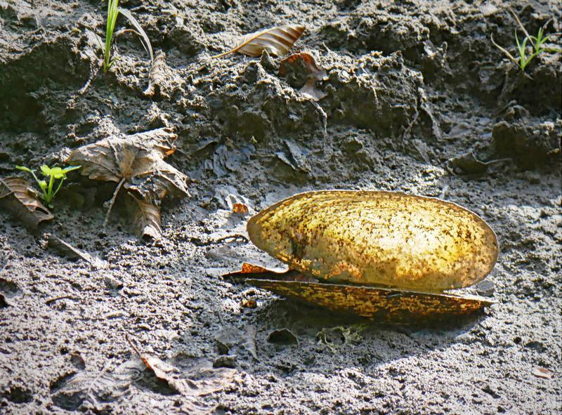 Au  fond d'un étang asséché, de l'or. 20041111490721718616738712