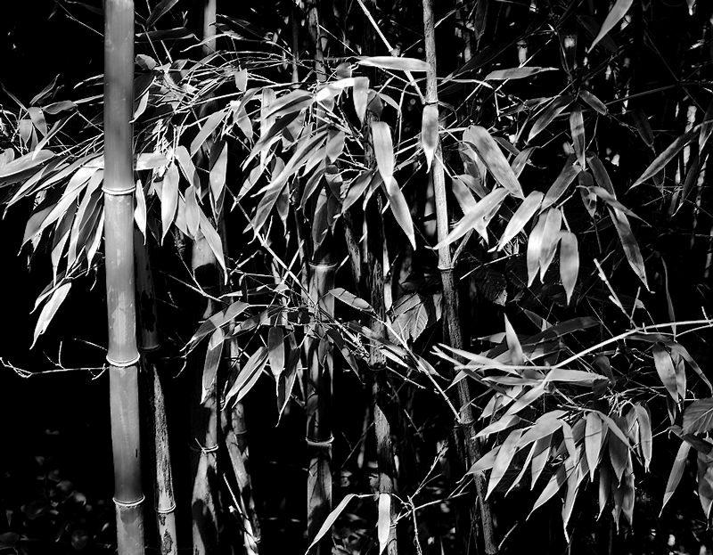 Bambou 20050812361121718616784364