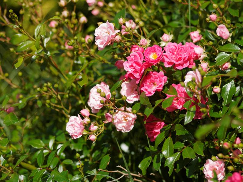 Dans le jardin aujourd'hui... 20052310420521004416809231