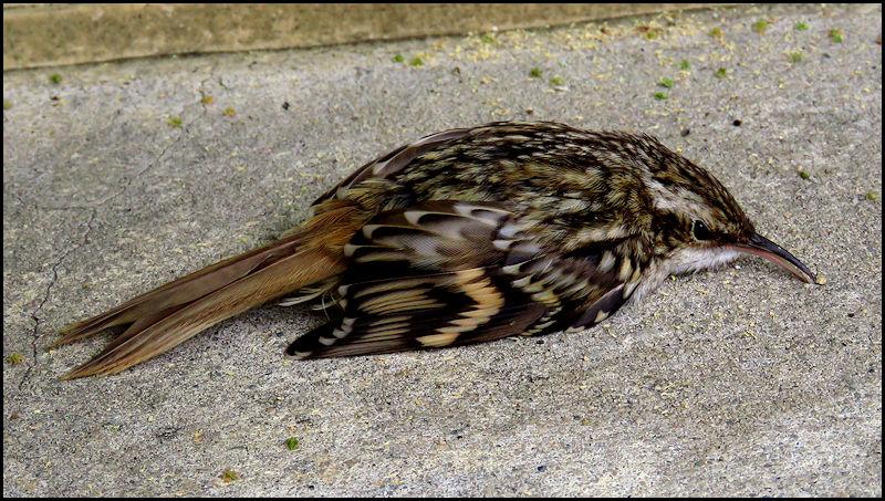 Forum oiseaux de la nature et sauvages: Nos p'tits copains à plume - Portail 20060311322723550116831452