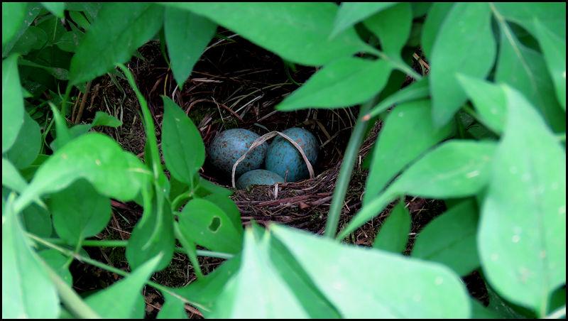 Forum oiseaux de la nature et sauvages: Nos p'tits copains à plume - Portail 20060311323123550116831455