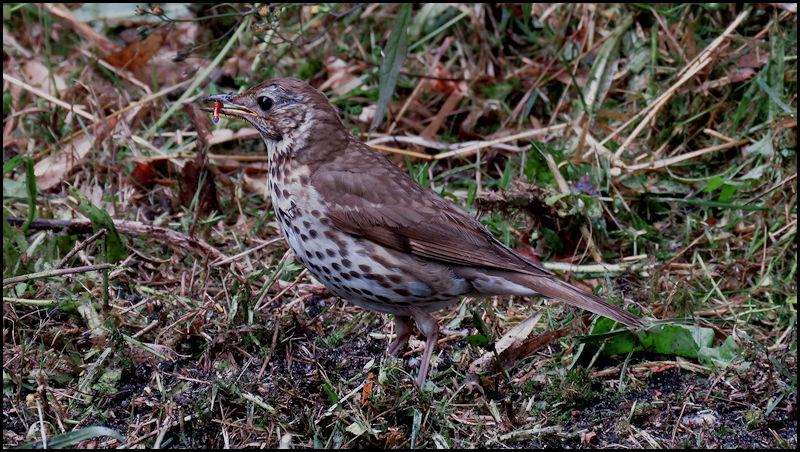 Forum oiseaux de la nature et sauvages: Nos p'tits copains à plume - Portail 20060610375423550116837170