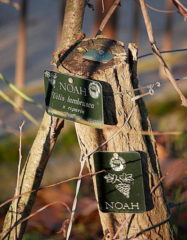 J'ai trouvé Noah, mais pas yannick 20060810145021718616840371
